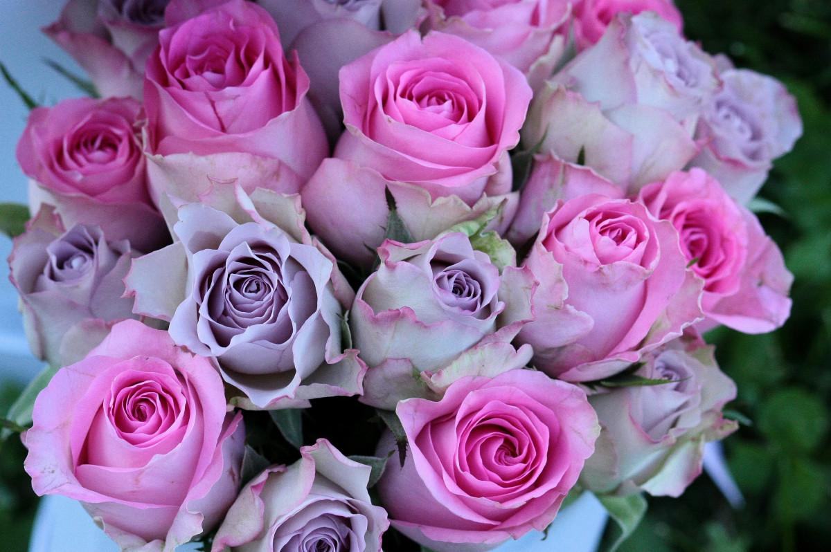 Fotos gratis flor p rpura p talo rosa rosado flores - Cortar hierba alta ...