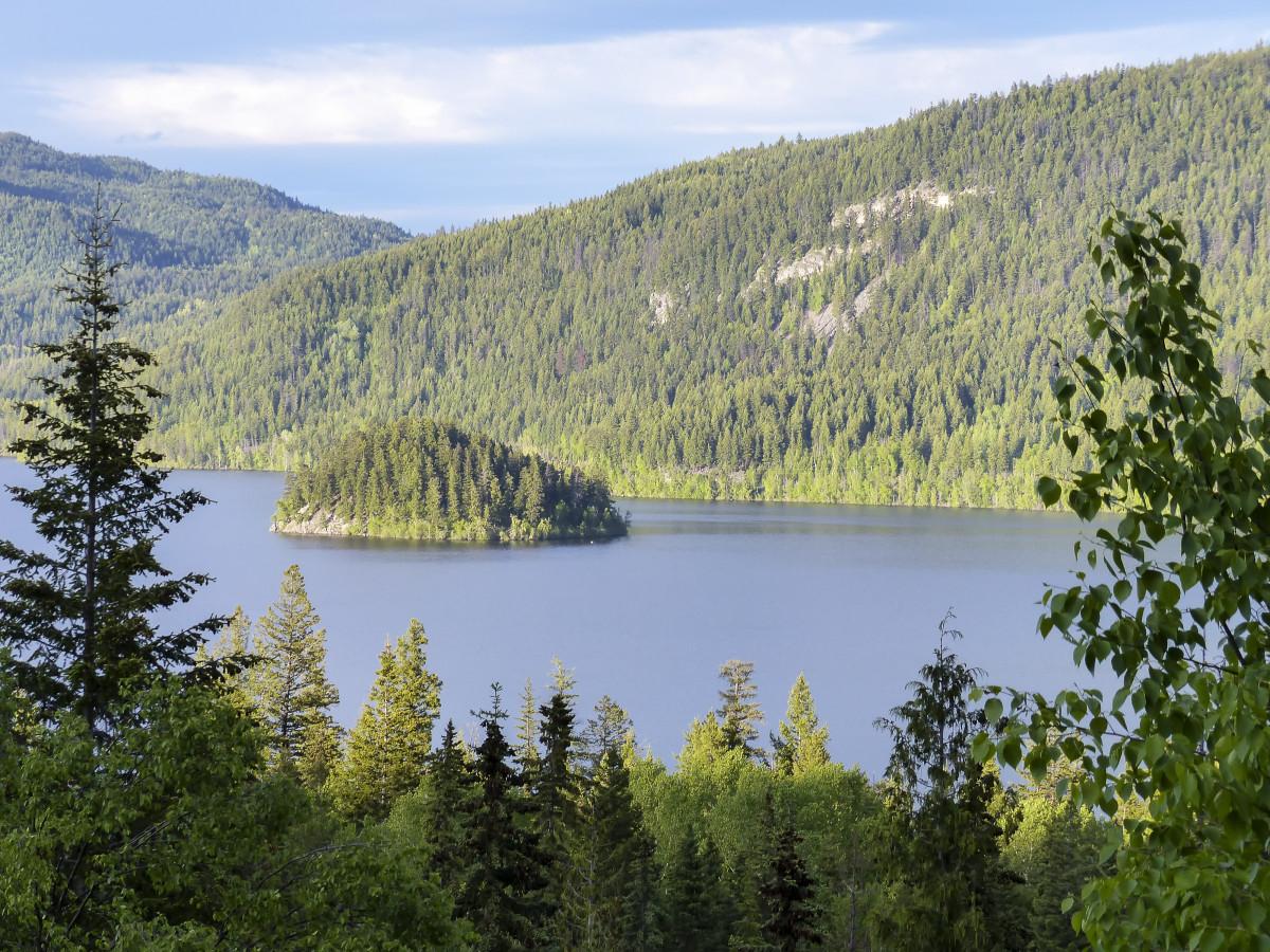 gambar pemandangan pohon air alam hutan gurun