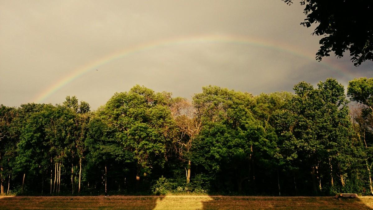 Дождь солнце радуга картинки