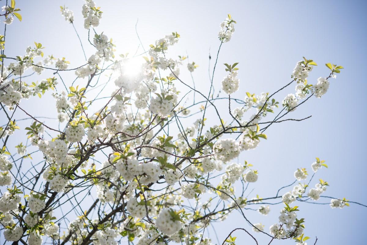 branch, flower, tree, spring, plant, blossom, twig, woody plant, sky, flowering plant, wildflower, plant stem, flowering dogwood