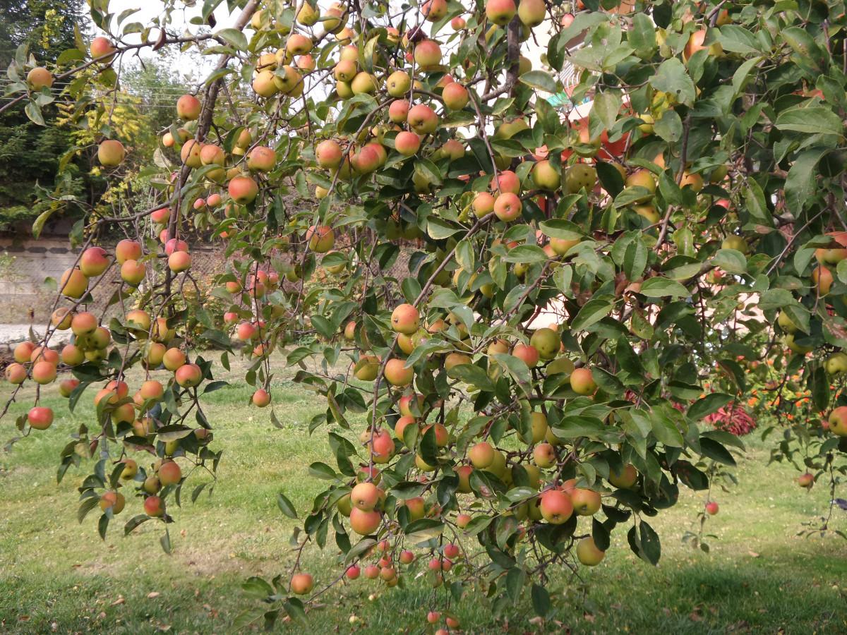помогает картинка фруктового сада без фруктов пуховик спортивного фасона