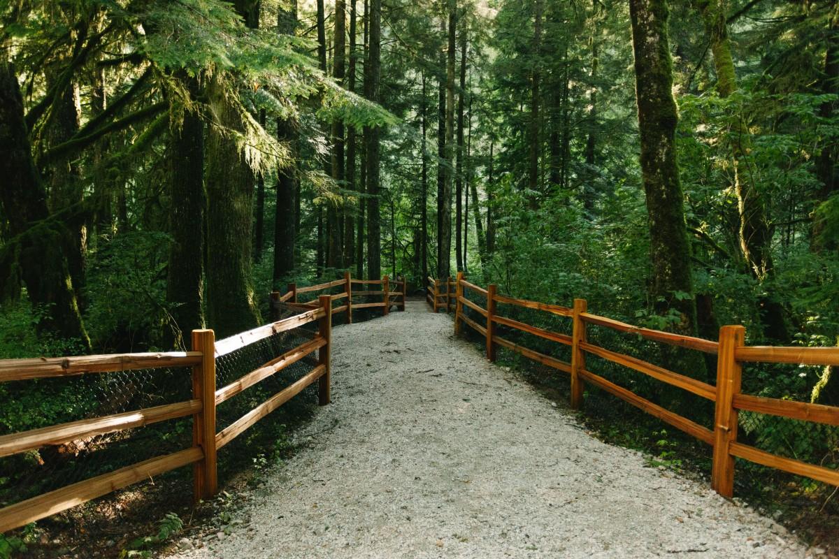Images Gratuites : forêt, clôture, Piste, jungle, parc ...
