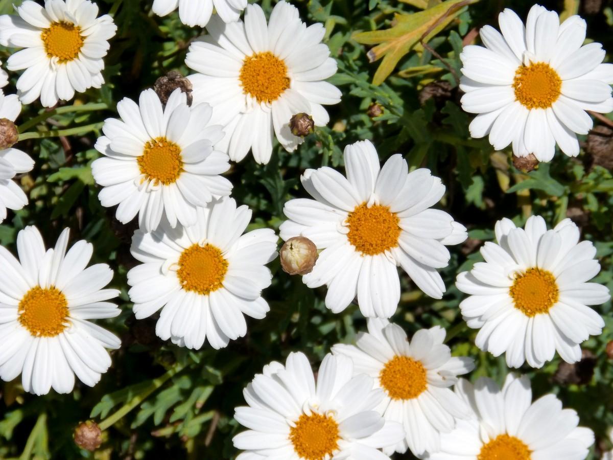 Free Images : Flower, Petal, Herb, Flowers, Background ...