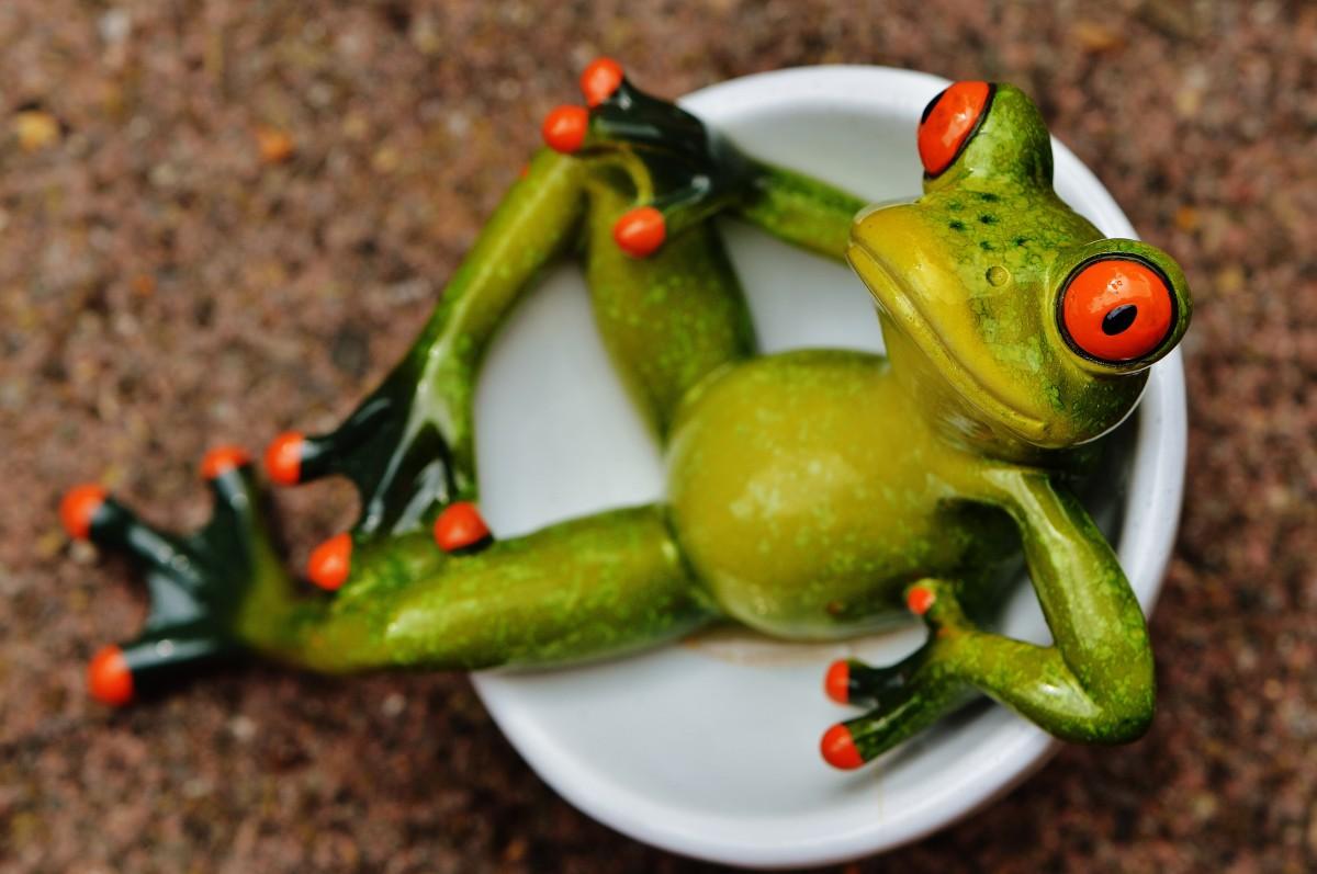 Картинки смешные с лягушками, прикольные