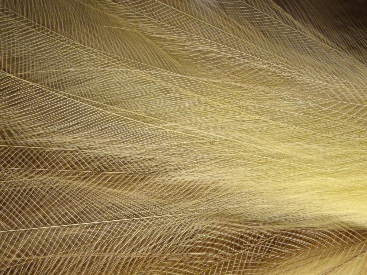 Gratis afbeeldingen : zand vleugel structuur hout zonlicht blad