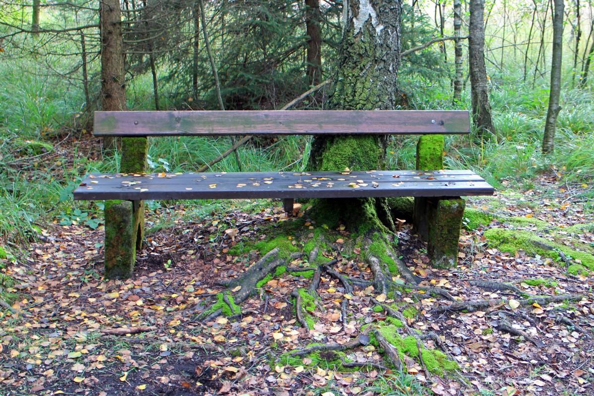 Gratis afbeeldingen tafel natuur bos hout spoor stoel berk rust uit meubilair wortel - Exotisch onder wastafel houten meubilair ...