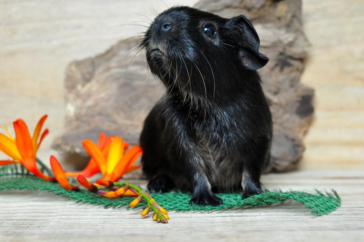 Free Images : animal, cute, wildlife, mammal, fauna, whiskers, vertebrate, otter, mustelidae 4928x3264 - - 960262 - Free stock photos - PxHere - 웹