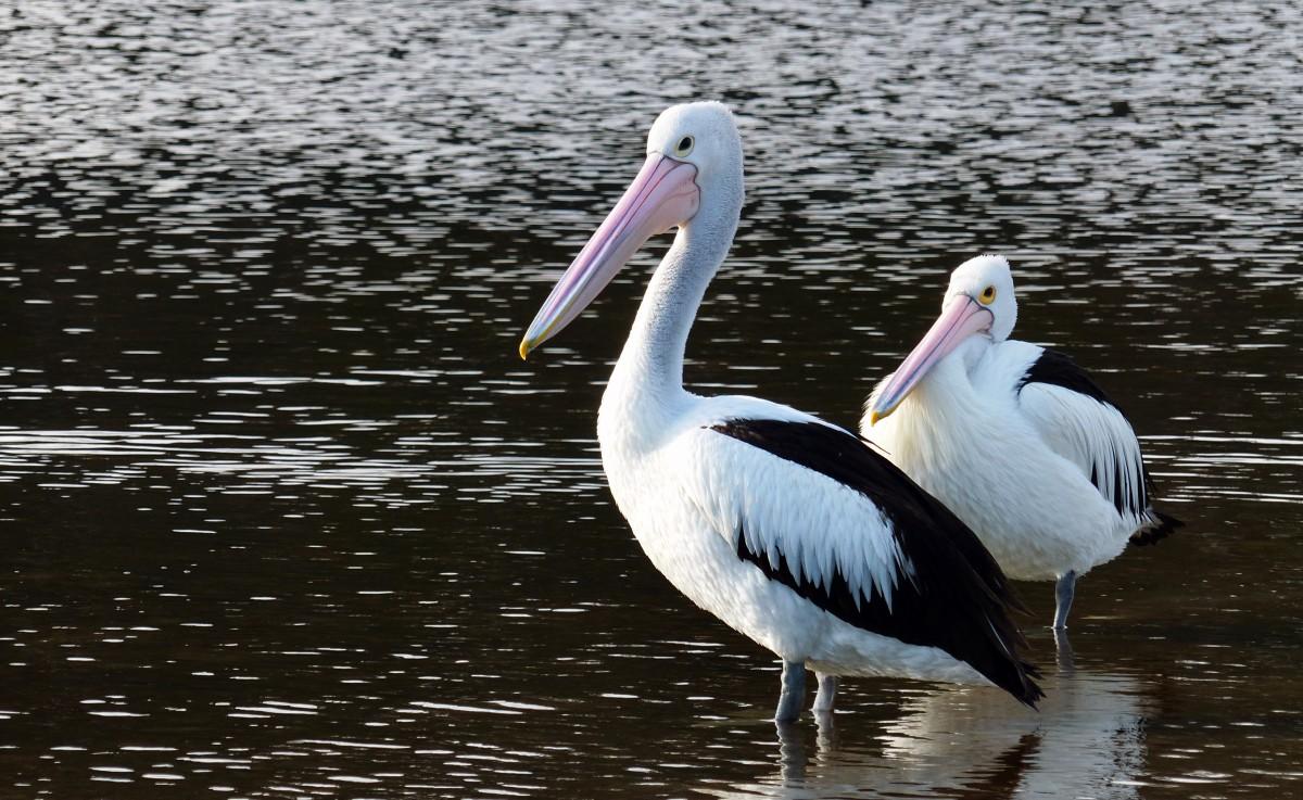 Aves-clasificación-de-los-animales-carnívoros