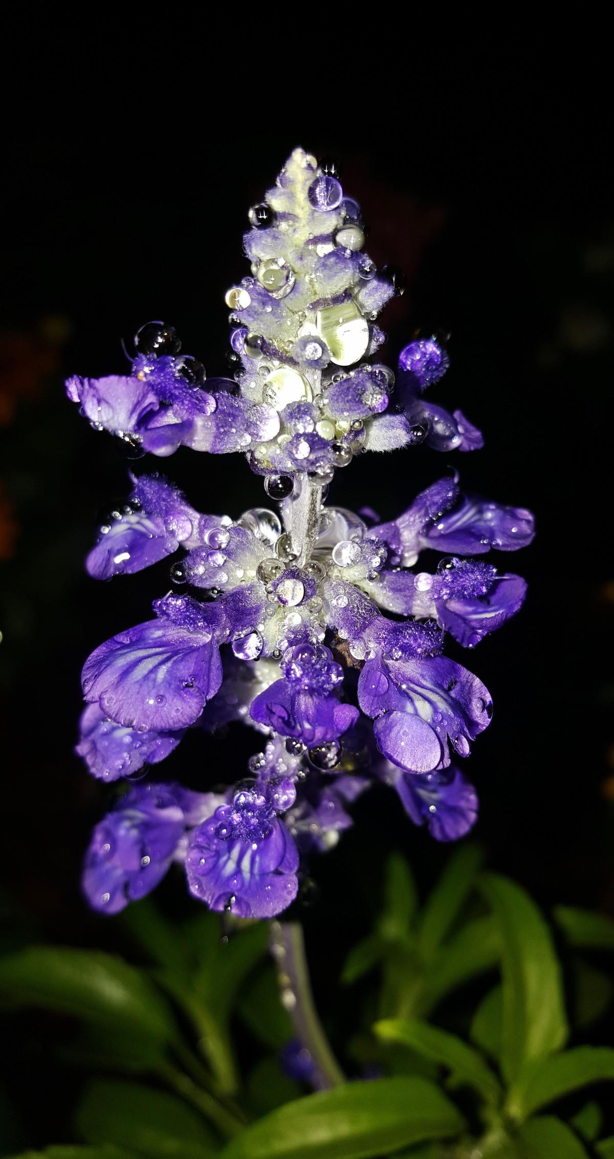 Free Images : blossom, dew, night, flower, petal, bloom ...