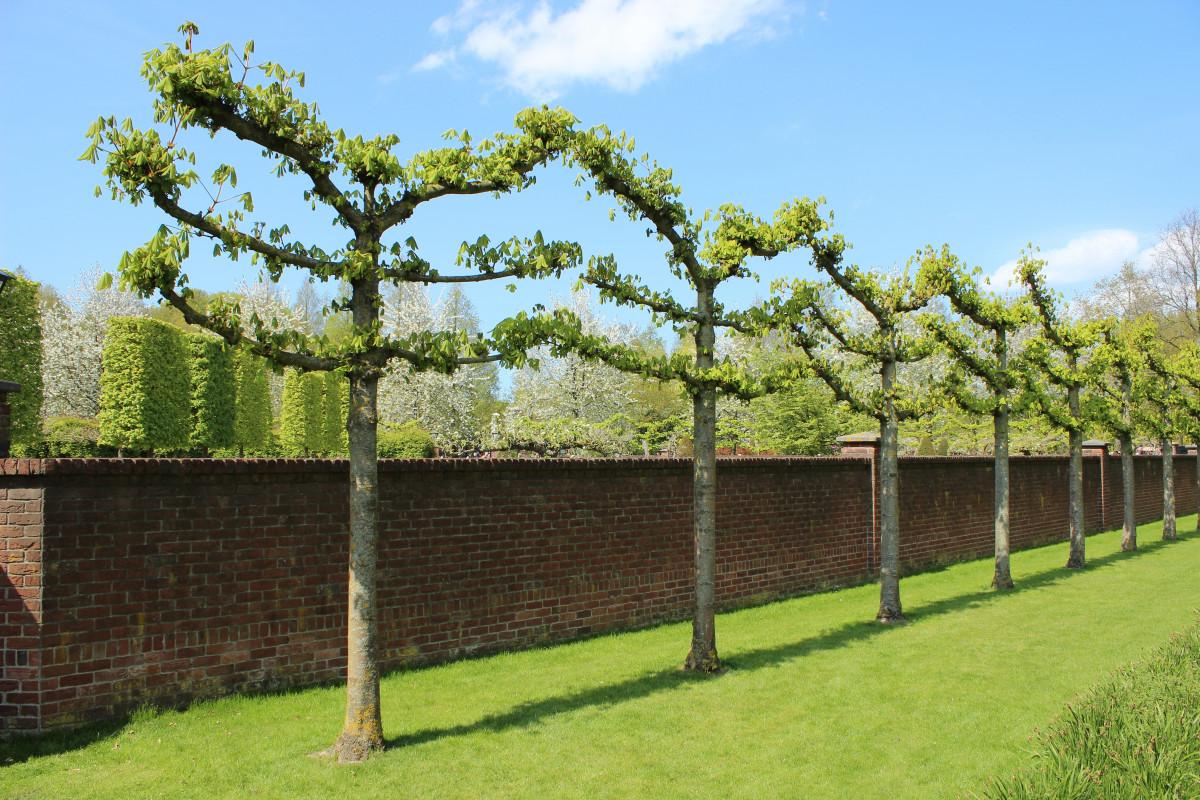 images gratuites arbre la nature de plein air plante environnement vert p turage. Black Bedroom Furniture Sets. Home Design Ideas