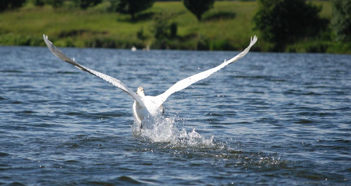 41+ Gambar Hewan Burung Dan Ikan Gratis