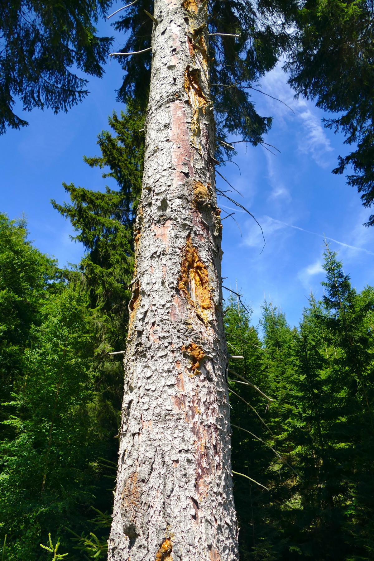 Images gratuites arbre r gion sauvage plante tronc - Arbres a feuilles caduques ...