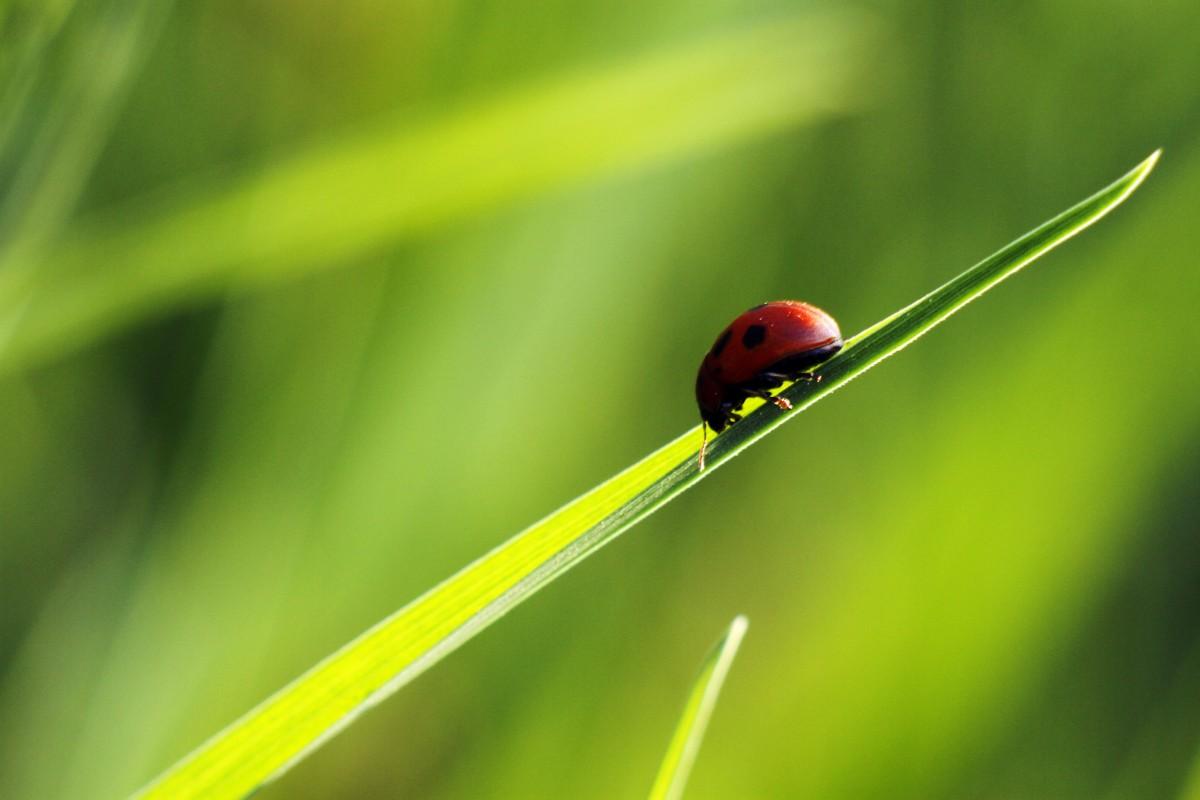 natur gräs utomhus- gren dagg ljus tillväxt Sol fält fotografi äng solljus blad blomma djur- sommar miljö ung vår grön röd Färg insekt makro fredlig små färsk nyckelpiga insekt färgrik gul trädgård stänga säsong fauna nyckelpiga ryggradslös liv närbild glad utomhus solig lycklig ljus mycket liten springtime flickslända fukt makrofotografering växtstemen
