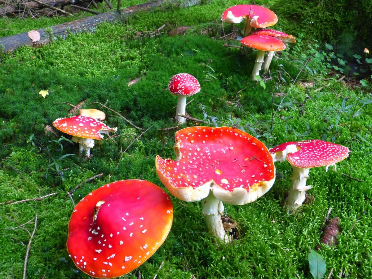 Fotos gratis naturaleza bosque planta c sped flor for Arbol rojo jardin