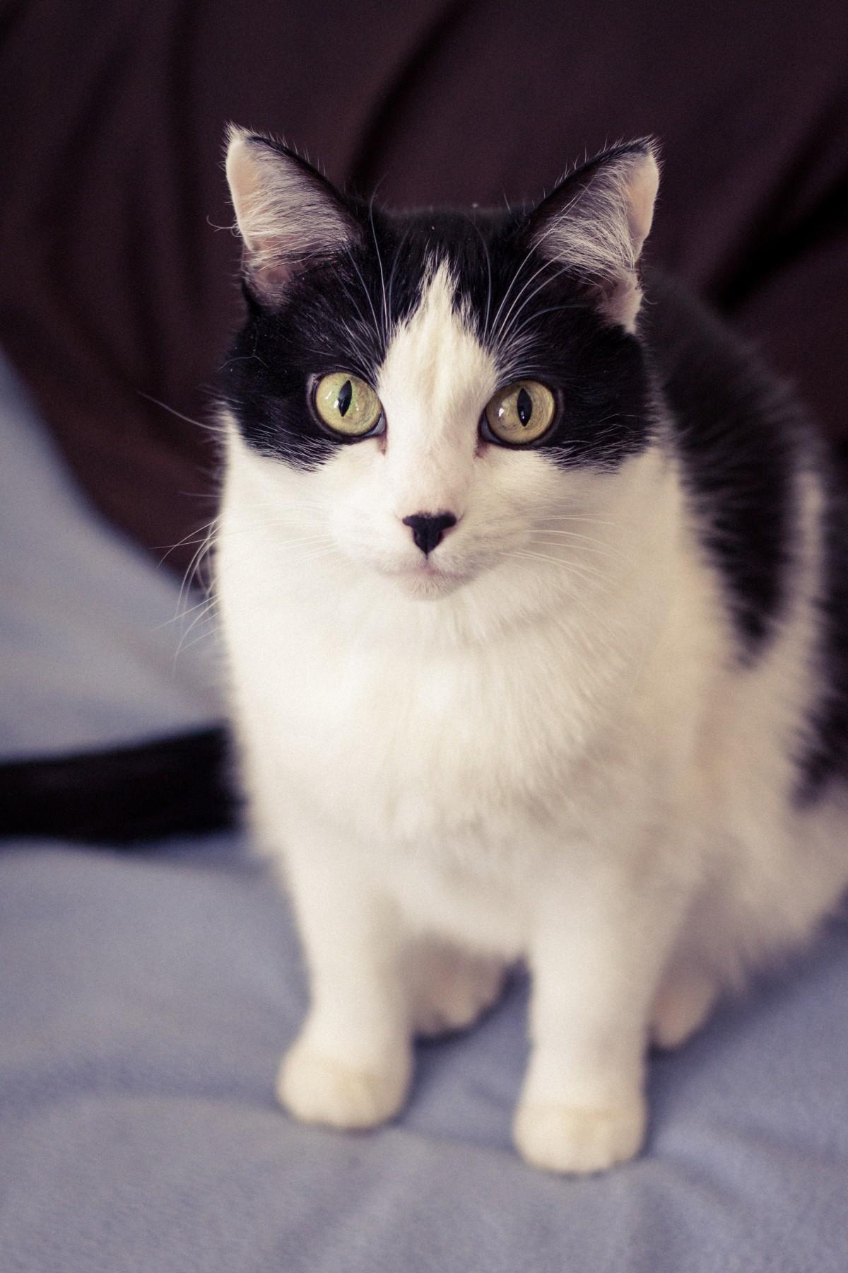 biela dievča mačička obrázky