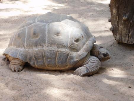 kostenlose foto : schildkröte, zoo, schmetterling, terrestrisches tier, emydidae, reptil, fauna