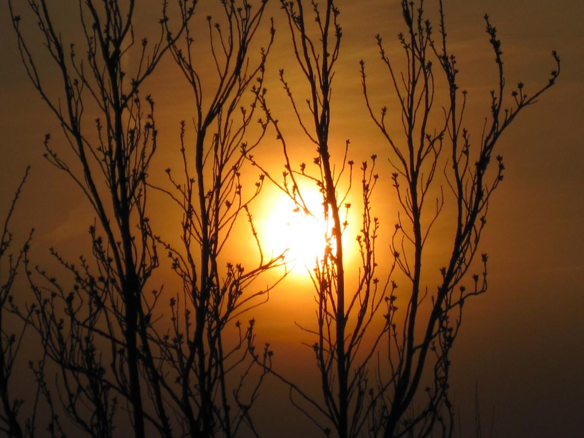 Gambar Pohon Alam Cabang Bayangan Hitam Cahaya Matahari Terbit Matahari Terbenam Sinar Matahari Pagi Fajar Suasana Senja Refleksi Musim Gugur Percintaan Estetis Ranting Abendstimmung Perasaan Senang Sesudah Mengalami Kesenganan