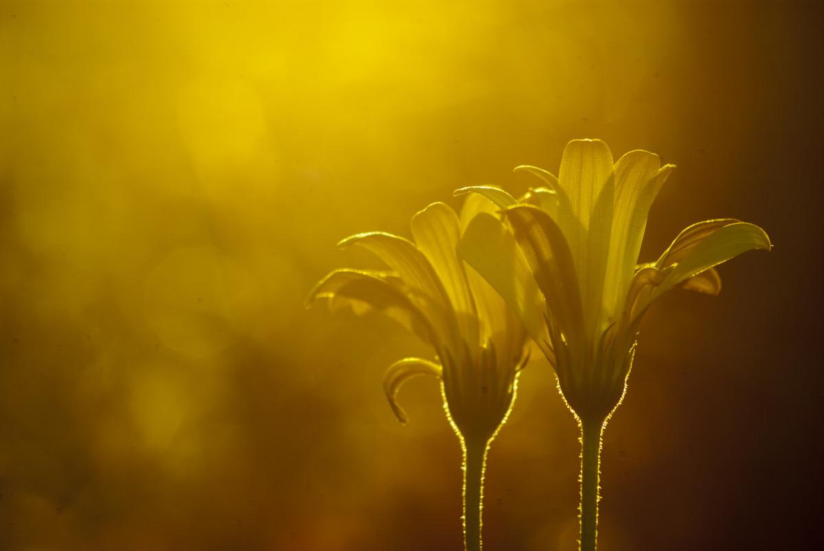 free images nature blossom light sunshine sun