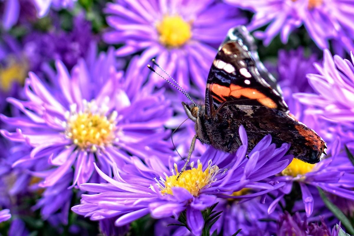 Картинки сиреневые цветы с бабочками, днем рождения