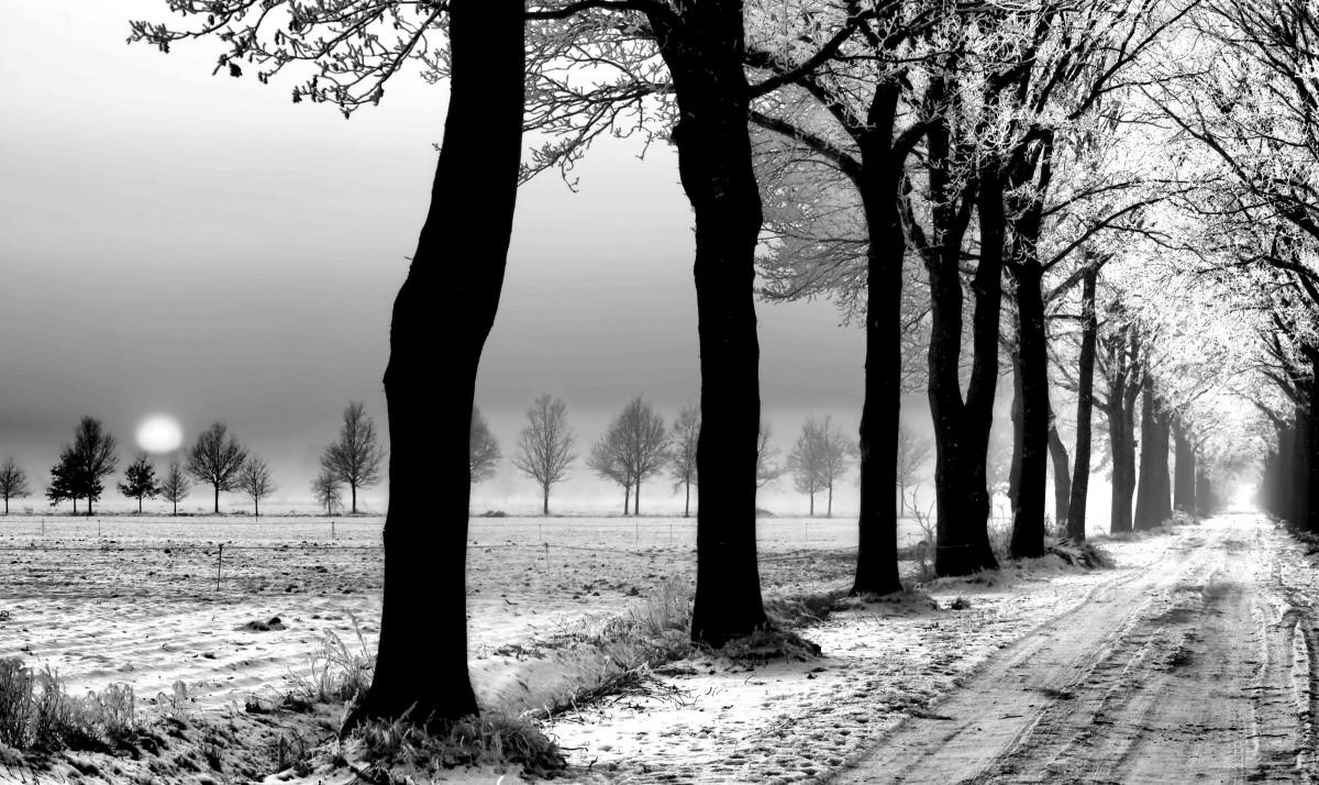 Banco de imagens panorama rvore natureza floresta for Paesaggi invernali per desktop