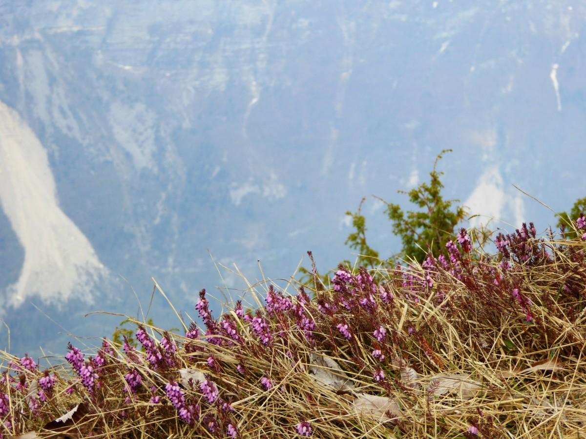 images gratuites paysage herbe montagne plante ciel fleur flore montagnes v g tation. Black Bedroom Furniture Sets. Home Design Ideas