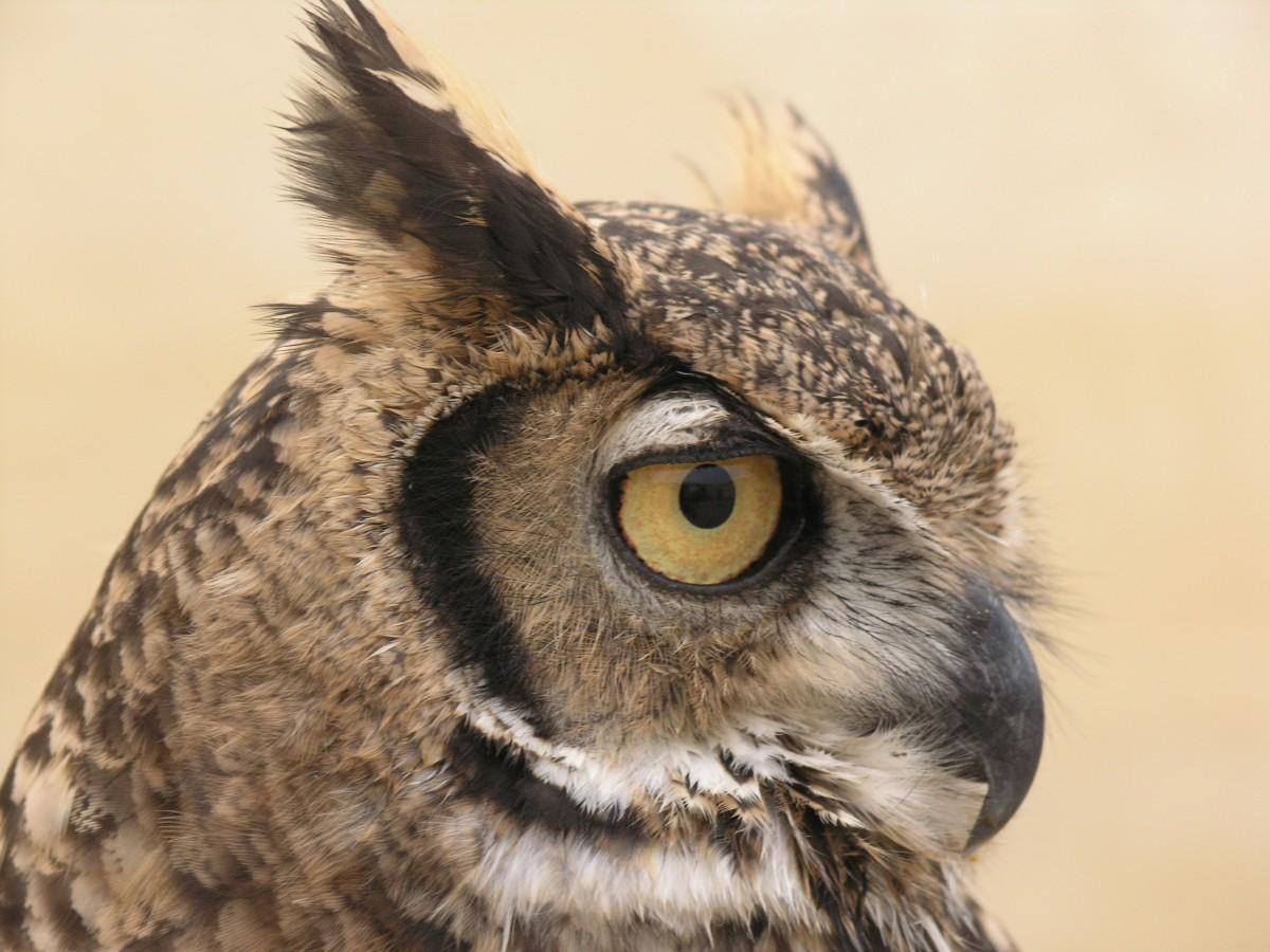 Free Images Peak Animal Graffiti Owl Painting Chest