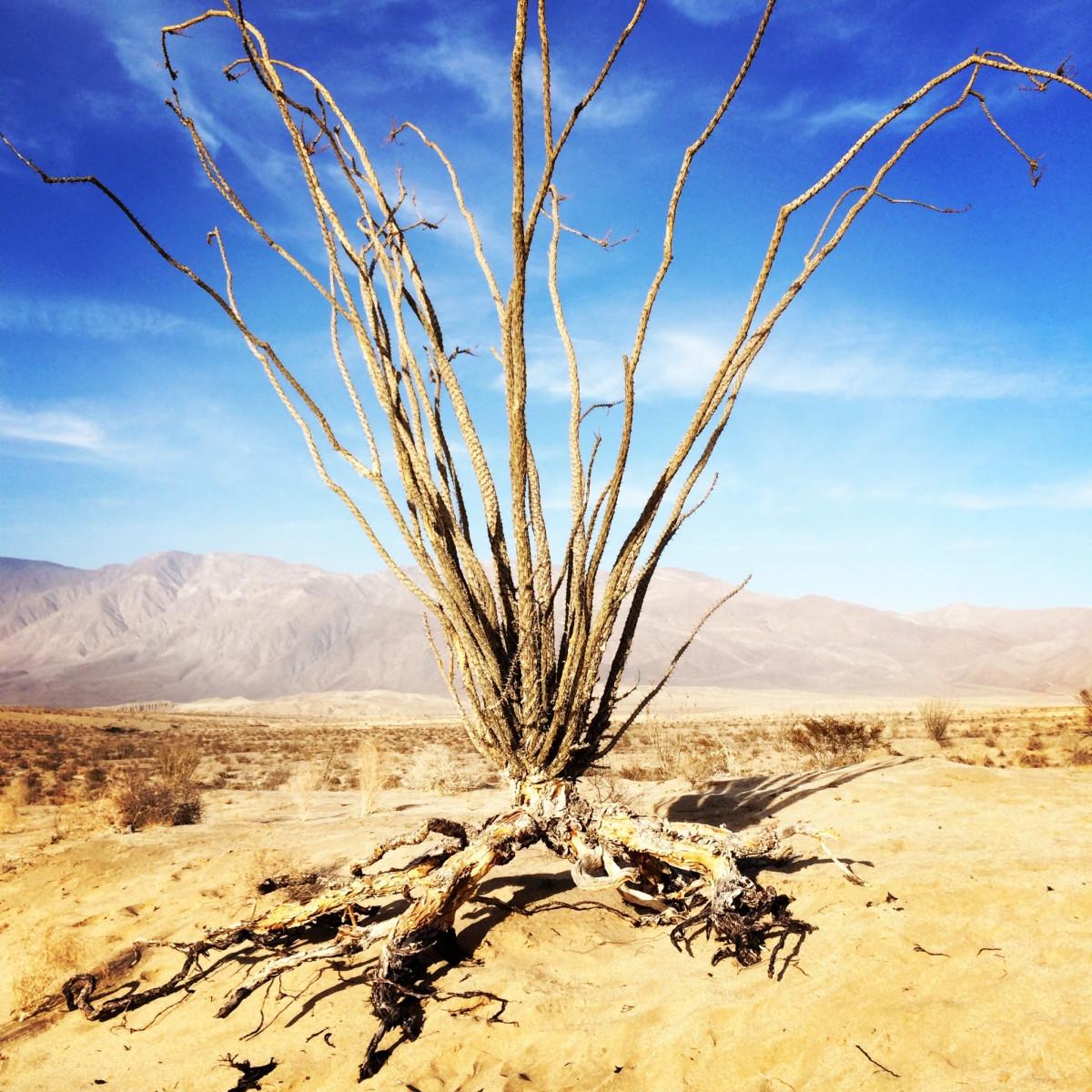 sahara desert plants - HD2048×2048
