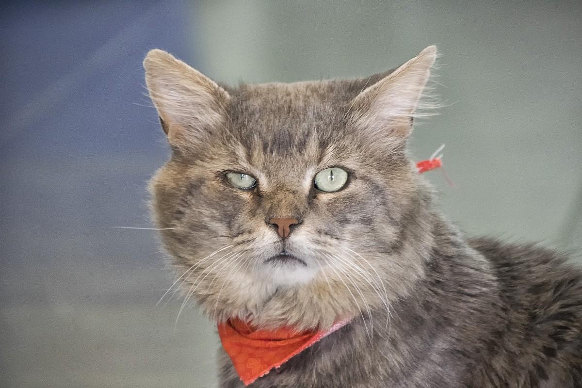 sherbrooke chat Rencontre dans la ville sherbrooke sur jecontactecom qui est un site de rencontres en ligne 100% gratuit pour les célibataires dans la ville sherbrooke.