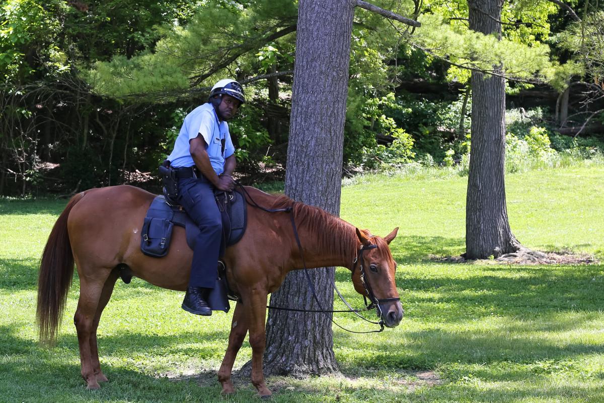 Езда на лошади простатит влияние простатита на длительность полового акта
