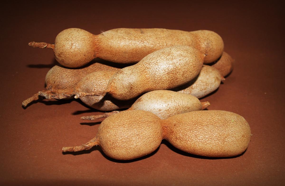 Images gratuites haricot aliments produire l gume surgir m dicament cuill re biologique - Haricot vert fruit ou legume ...