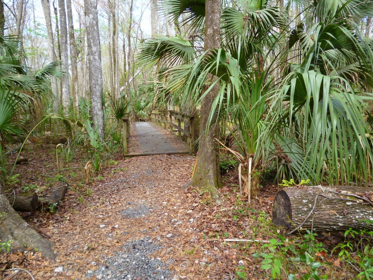 Gratis afbeeldingen boom natuur bos pad voetganger fabriek stoep bloem schaduw - Prieel structuur ...