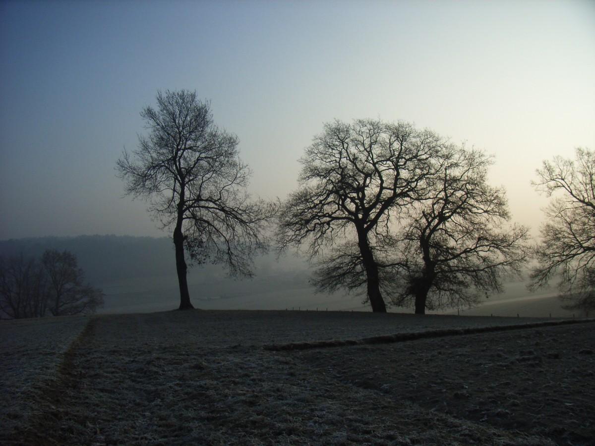 sun fog sunrise trees - photo #25