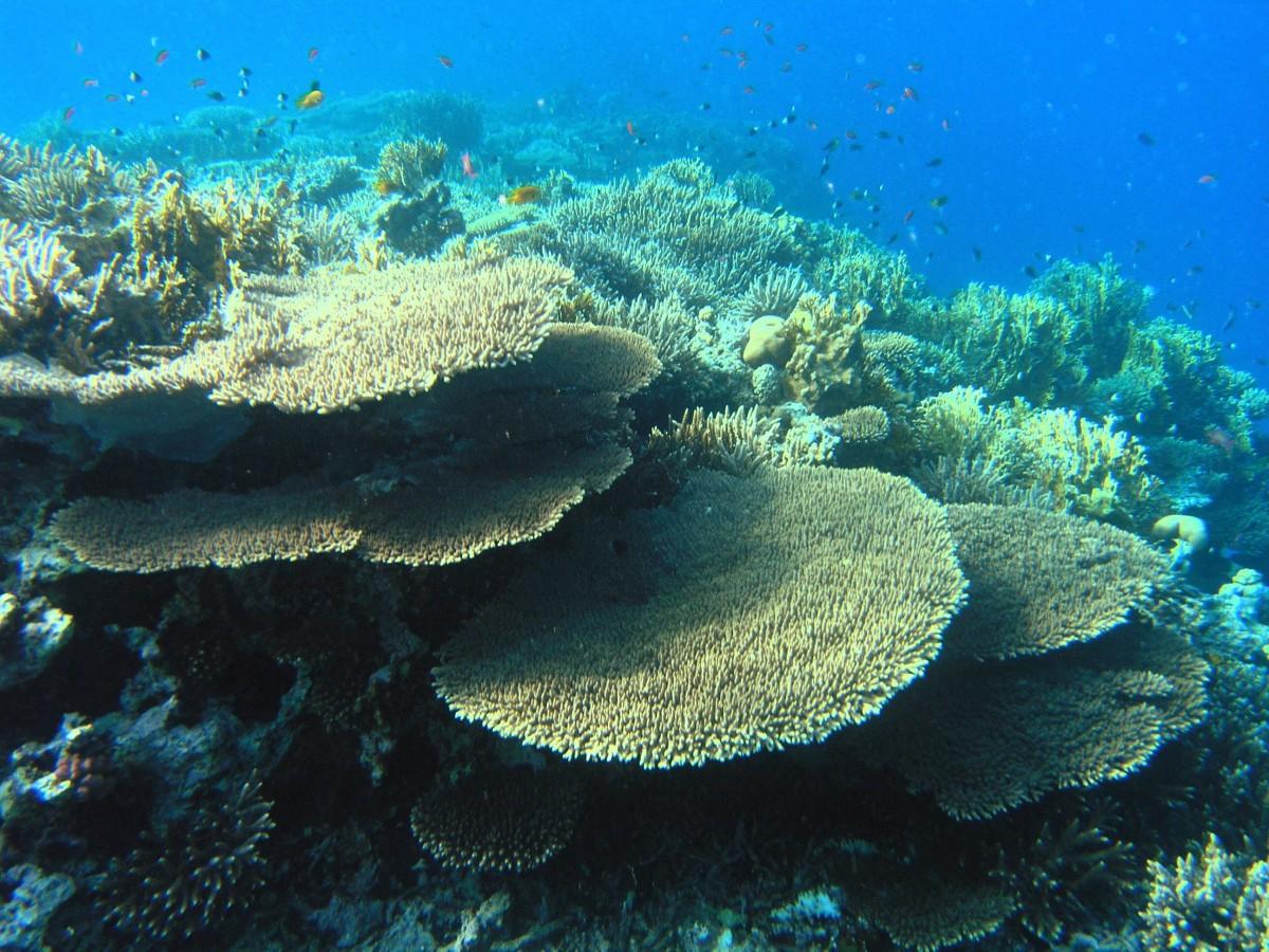 Bottom of the ocean life
