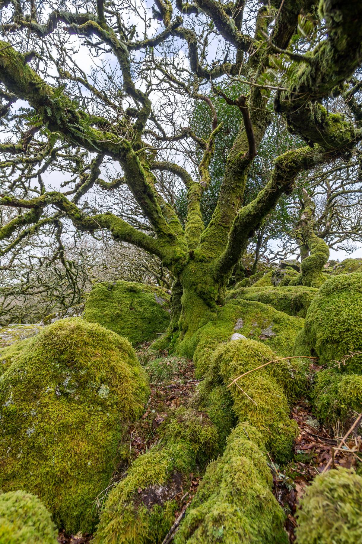 Baum Wald Ast Pflanze Blatt Blume