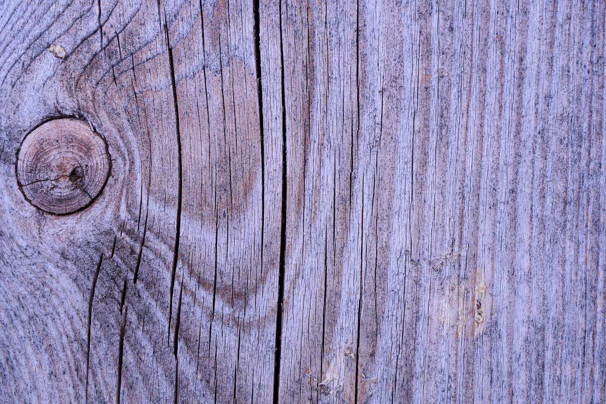 무료 이미지 : 자연, 목재, 조직, 내부, 트렁크, 벽, 형성, 야생 ...