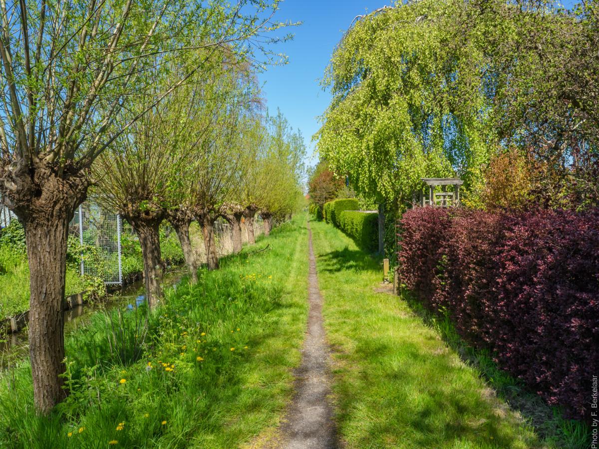 fotos gratis naturaleza c sped flor pasarela patio