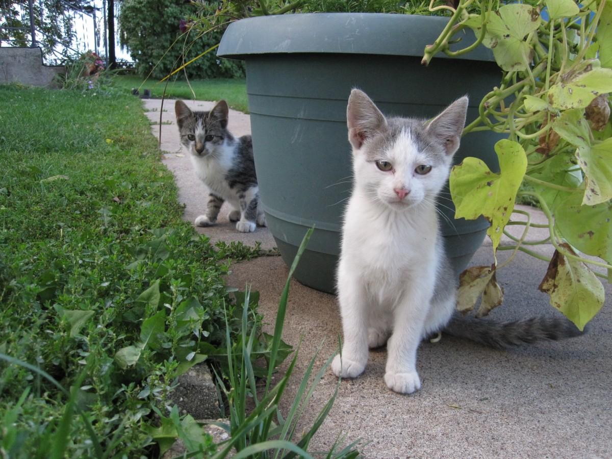 Gambar hewan Melihat membelai halus anak kucing licik
