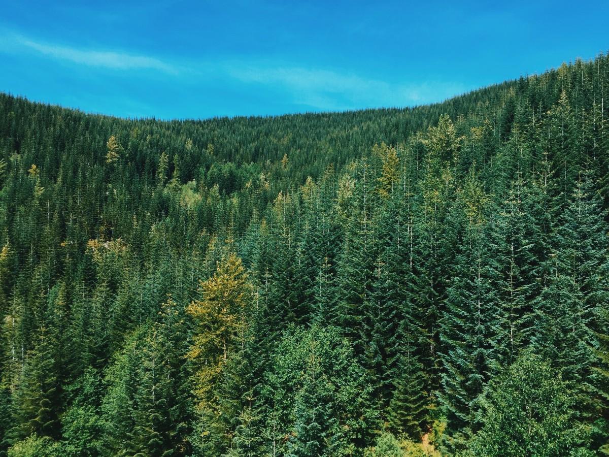 Картинки российский лес