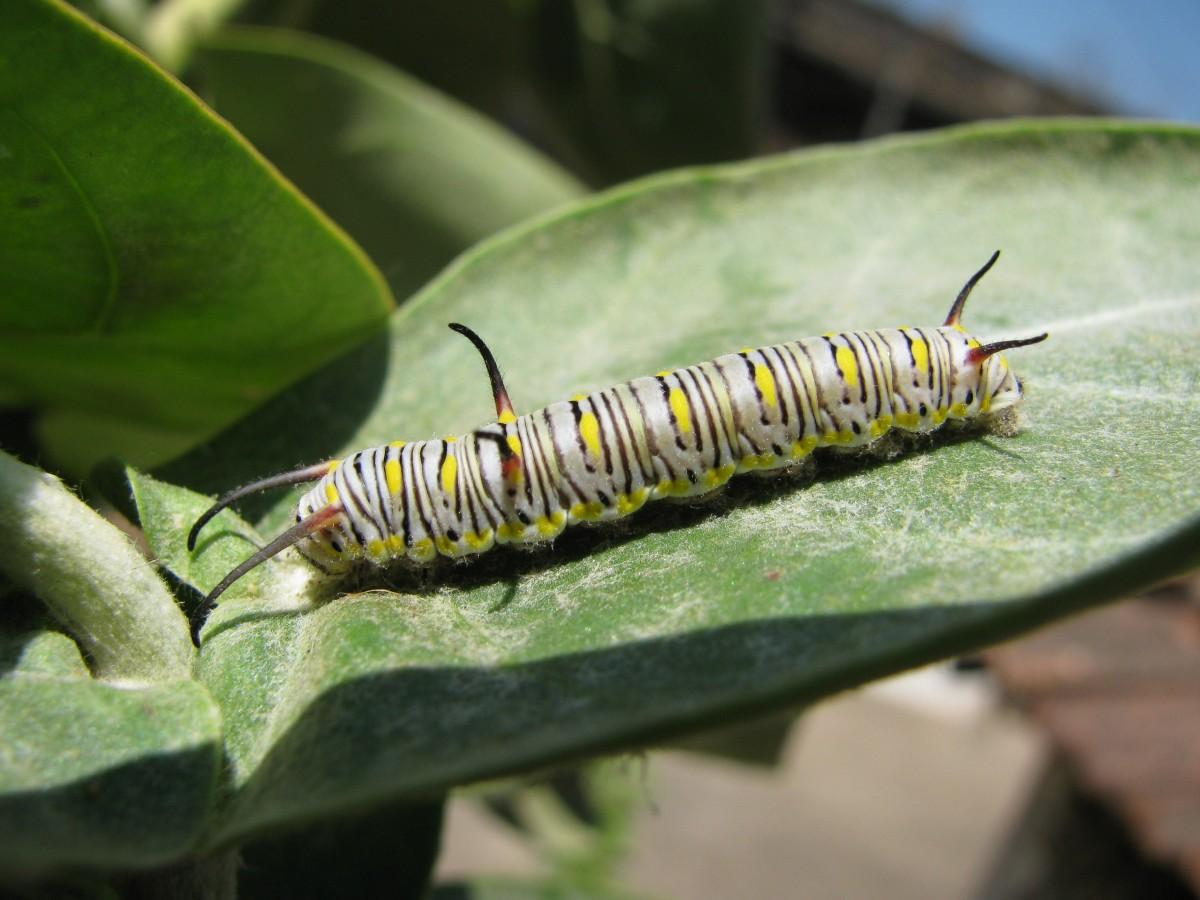 kostenlose foto natur draussen tierwelt wild insekt klein fehler fauna wirbellos. Black Bedroom Furniture Sets. Home Design Ideas