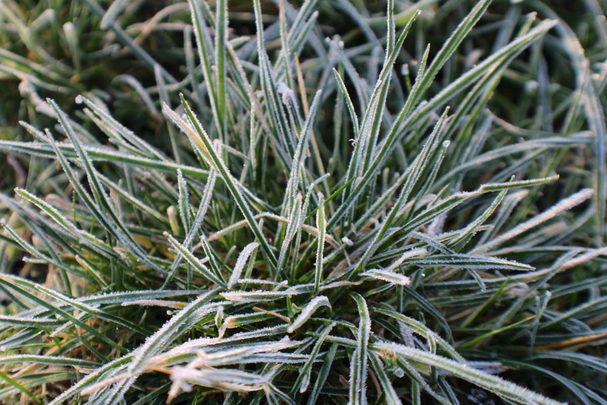 kostenlose foto baum gras ast schnee kalt winter pflanze blatt blume frost reif eis. Black Bedroom Furniture Sets. Home Design Ideas