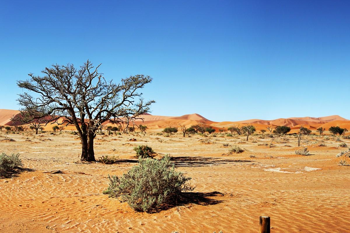 Free images tree nature wilderness prairie valley for Desert landscape