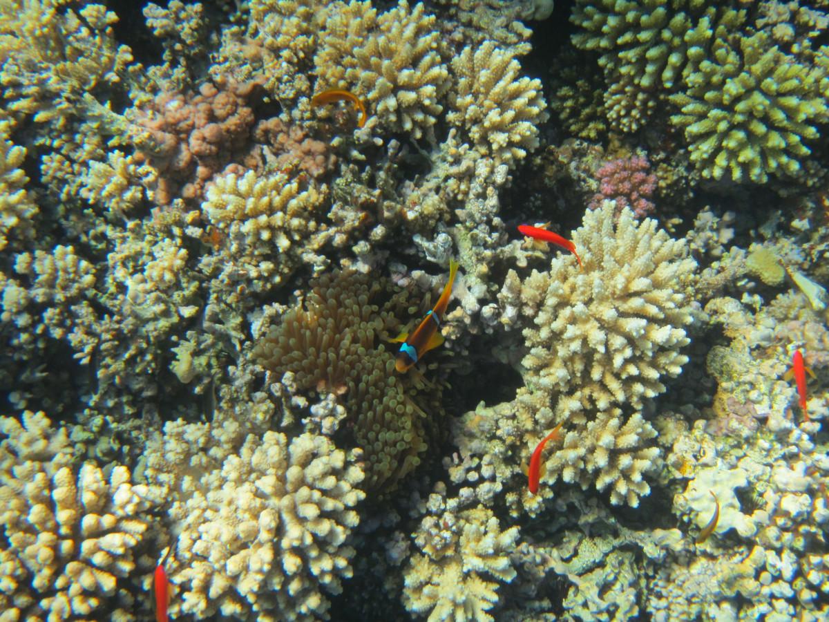 kostenlose foto  tauchen unterwasser biologie fisch