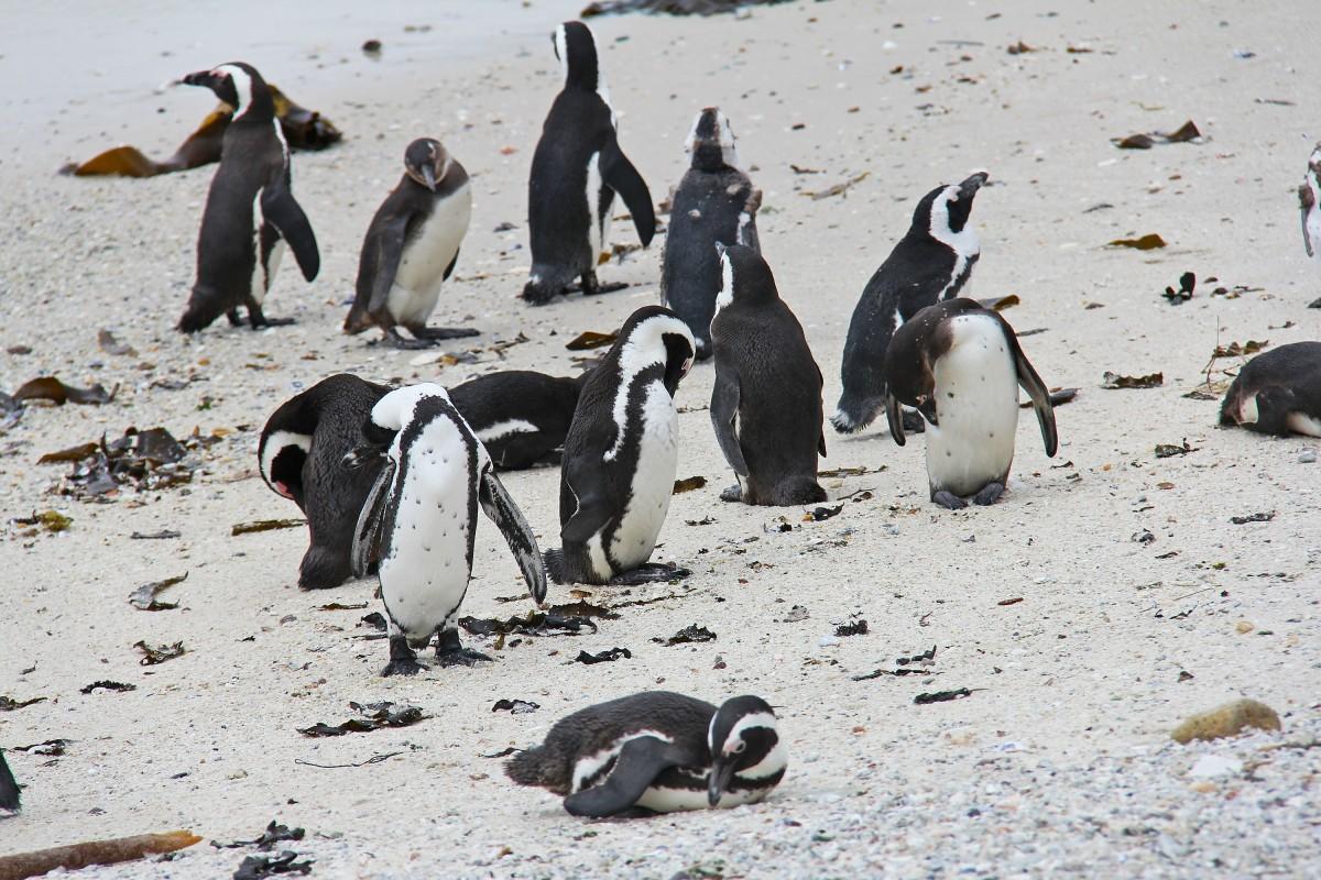 тем временем фото пингвин в шляпе заставить говорить продукте