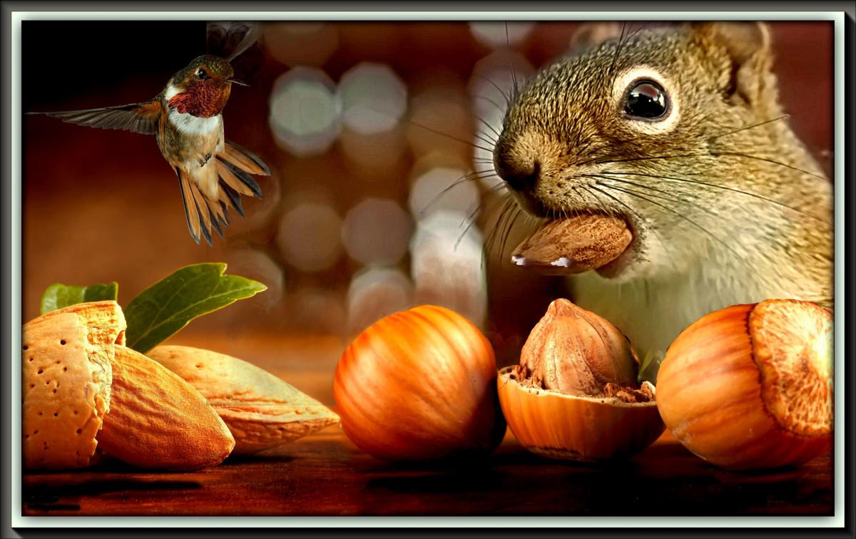 Открытки, картинки ем орехи прикол