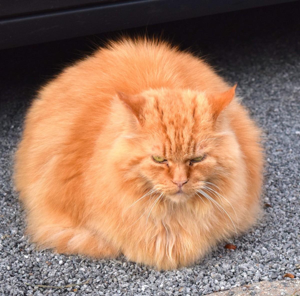 μεγάλο μουνί γάτα μουνί στο πουλί εικόνες