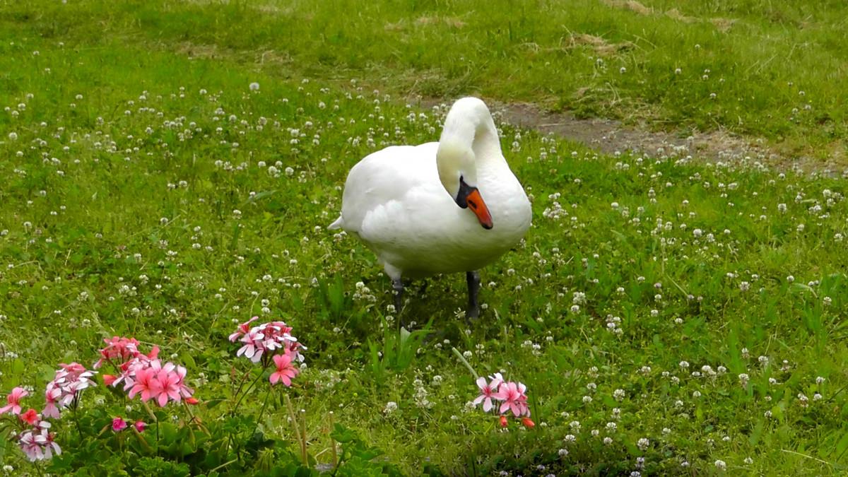 Фото картины природа цветы вода животные птицы трава