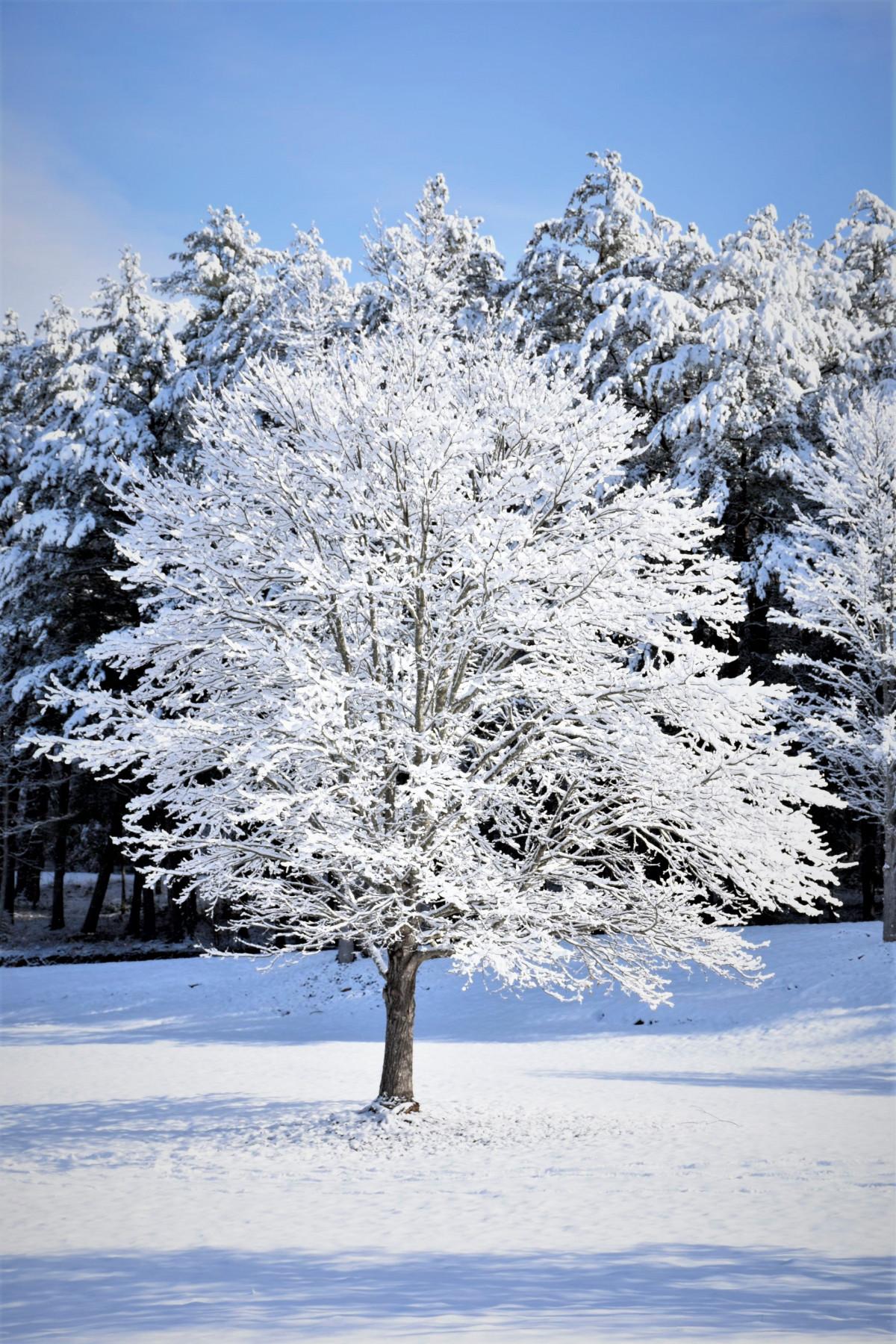 Fotos gratis rbol naturaleza rama flor nieve fr o for Arboles en invierno