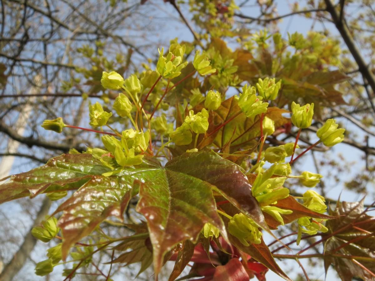 Fotos Gratis : árbol, Naturaleza, Rama, Flor, Planta