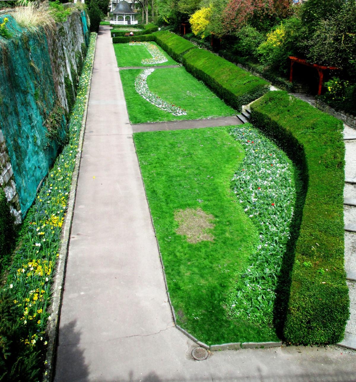Images gratuites arbre herbe plante pelouse feuille for Plante herbe haute