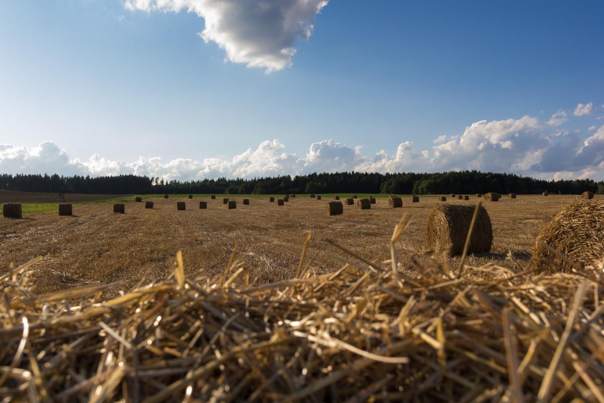 Картинки о сельскохозяйственных работах на полях